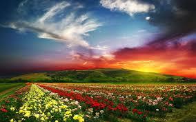 abundant field