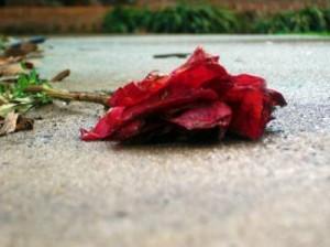 crushed-rose